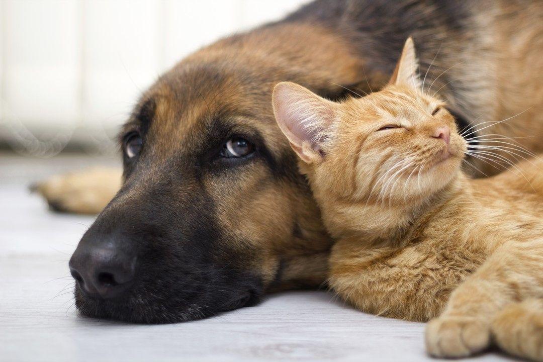 Картинки по запроÑу chien et chat