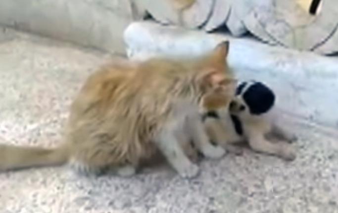 Уличная кошка услышала, как новорожденный щенок просит о помощи. Посмотрите, что было дальше