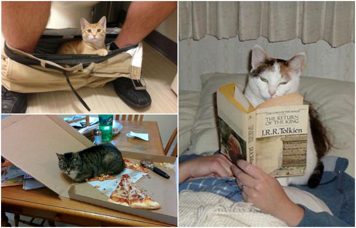 17 наглых котов, которым все равно на личное пространство своих хозяев