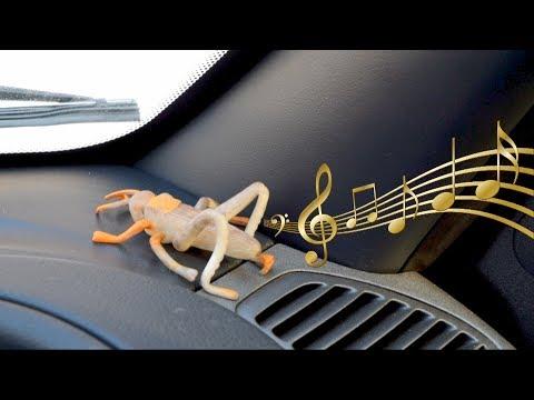 Как сделать салон автомобиля тише СВОИМИ РУКАМИ, избавиться от сверчка