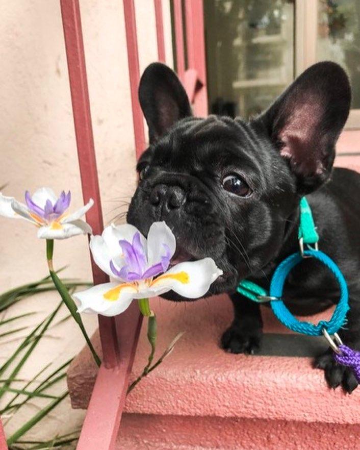 """25 умилительных фото собак, которые заслужили звание """"хороший мальчик"""""""
