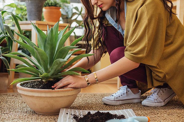 Посади фикус! 6 полезных для здоровья домашних растений