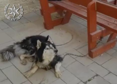В Израиле умение петь помогло потерявшейся собаке вернуться к хозяину