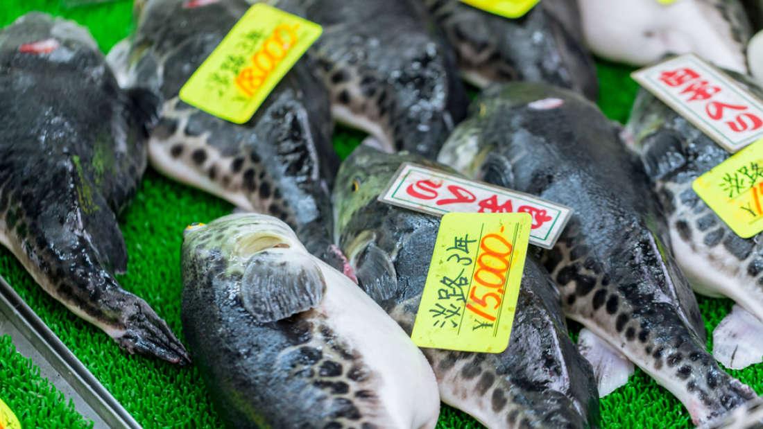 Самые опасные для жизни блюда, пользующиеся популярностью в разных уголках планеты
