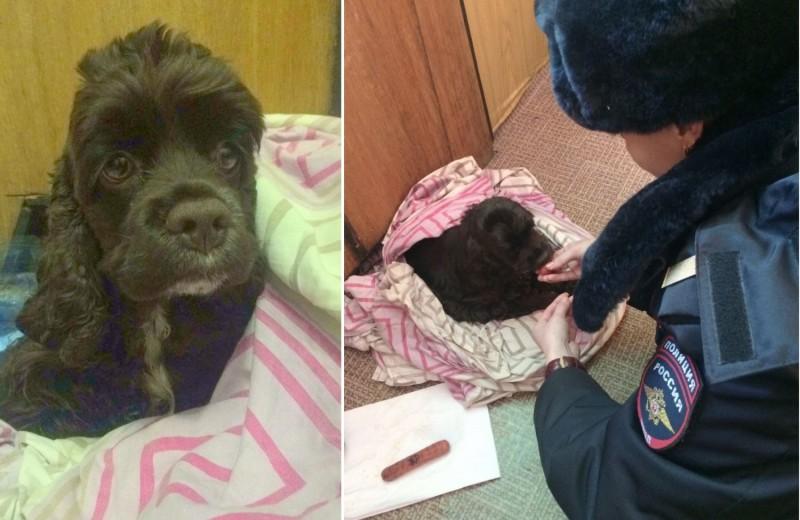 Московские полицейские спасли замерзающего в сугробе щенка спаниеля