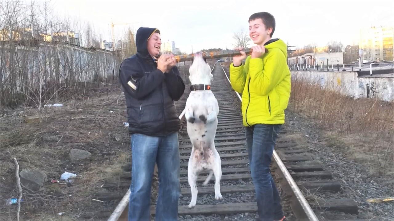 Приколы с животными - Про со…