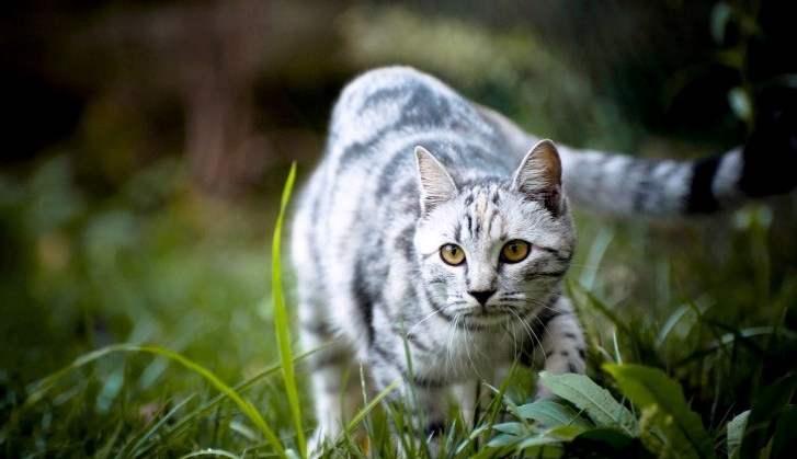 История про хитрого и мстительного кота