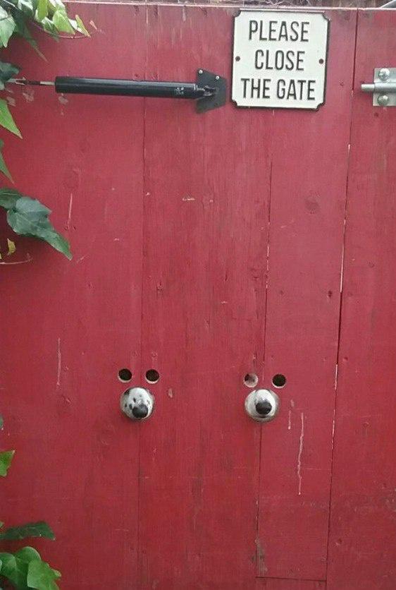 """""""Пожалуйста, закрывайте ворота"""""""