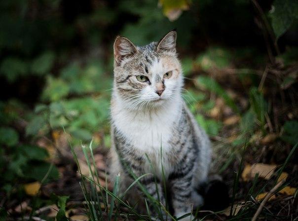 «Днём кошка спала внутри, а на ночь её выставляли на улицу!» Латифа не ждала любви, но она пришла