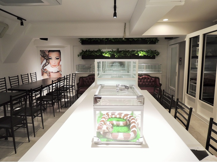 Змеиное кафе в Японии
