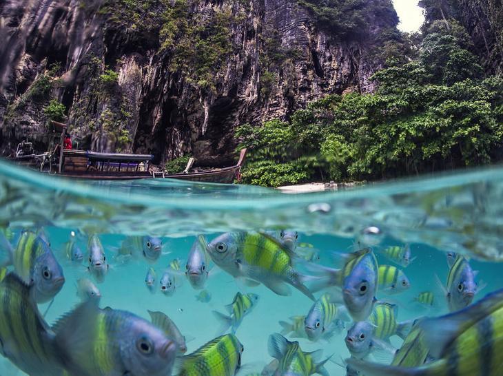 Подводная жизнь Таиланда