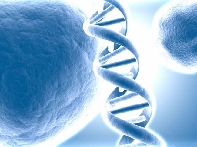 Сила мысли способна изменять генетический код организма