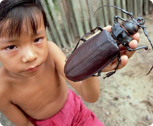 10 самых крупных насекомых в мире