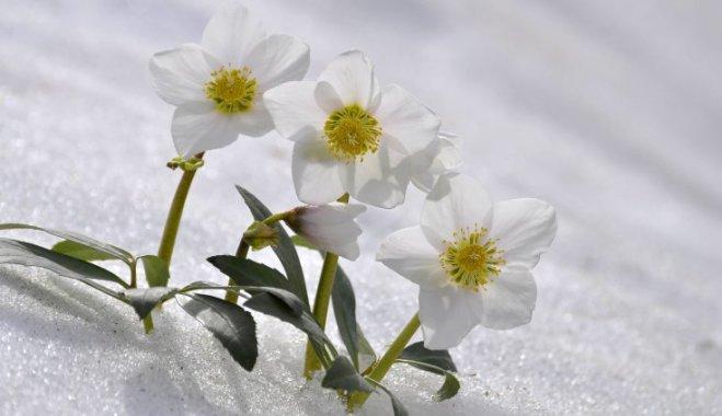 11 самых ранних весенних цветов для вашего сада и как за ними ухаживать