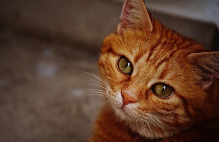 История про большого кота, к…