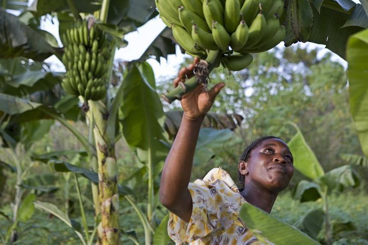 Местная еда. 12 фактов об Уганде - жемчужине Африки. Фото с сайта NewPix.ru