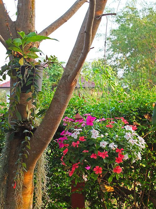 Ампельные растения для украш…