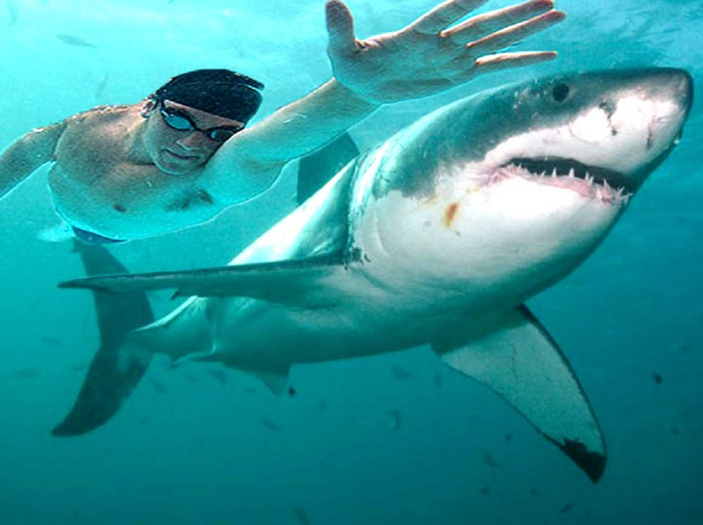 Майкл Фелпс проиграл заплыв белой акуле