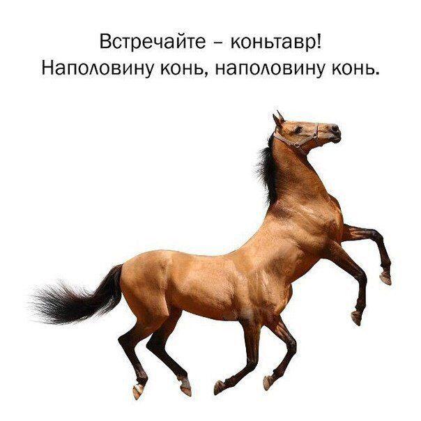 http://mtdata.ru/u14/photo9D1E/20745597204-0/original.jpg