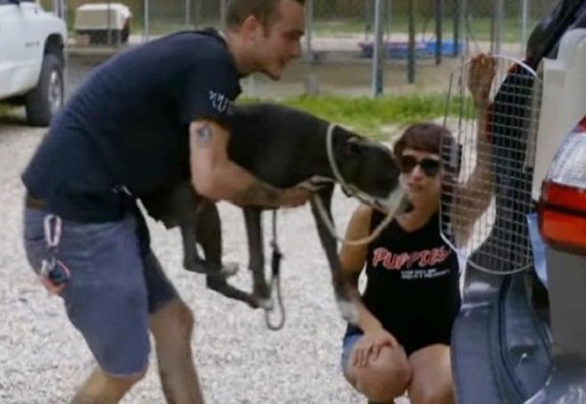 Истощенная кормящая собака где-то спрятала своих щенков, и люди отправились вслед за ней…