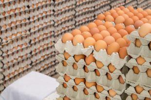 Как выбрать яйца для окрашивания на Пасху?