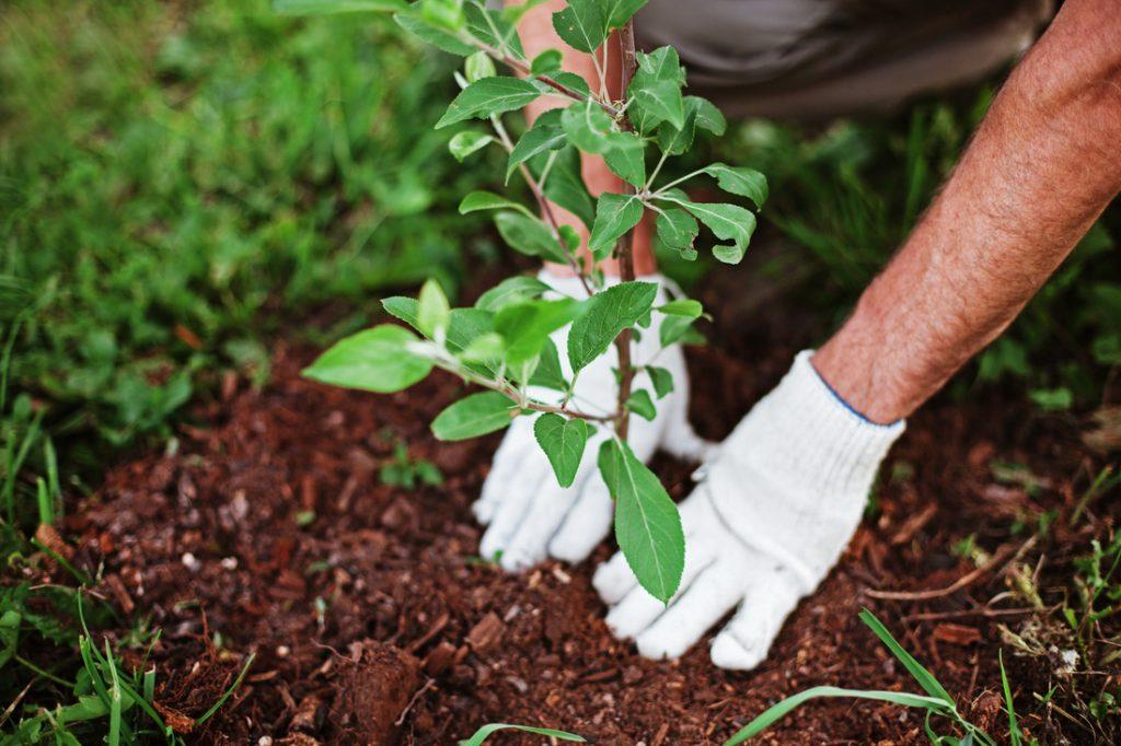 Не успели посадить – прячьте…