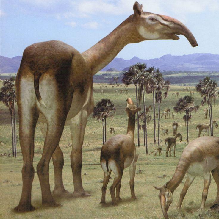 Литоптерны: Древние верблюды…