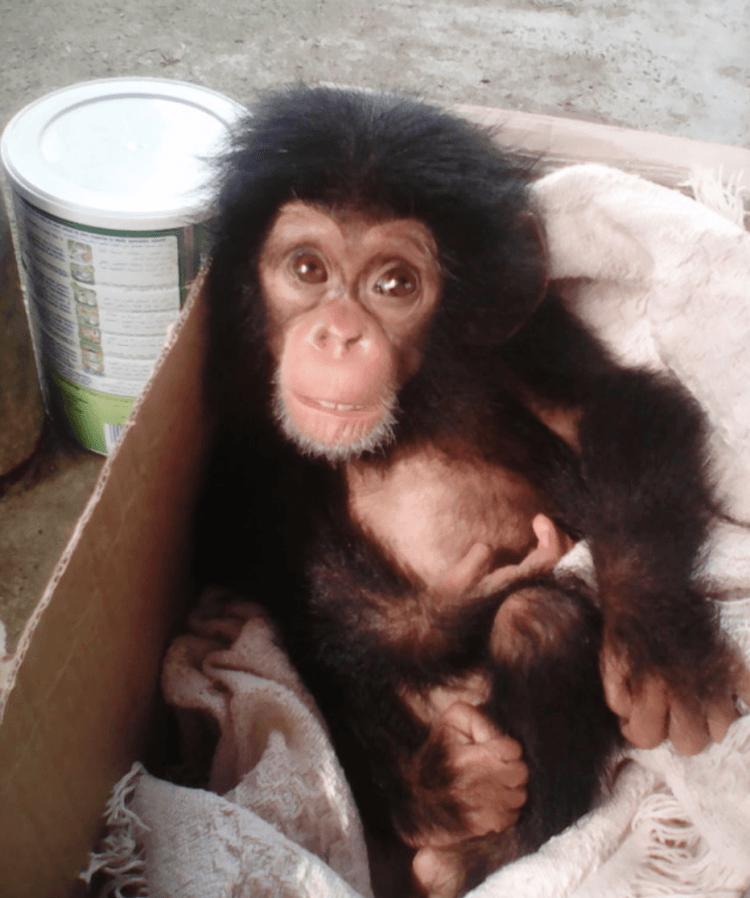 Его родителей уничтожили браконьеры и он был обречен, но в его жизни появилась она…