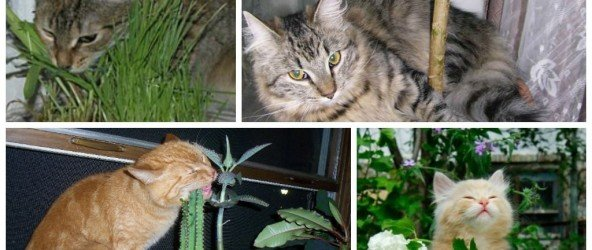 Домашние животные и растения — кто кого не любит