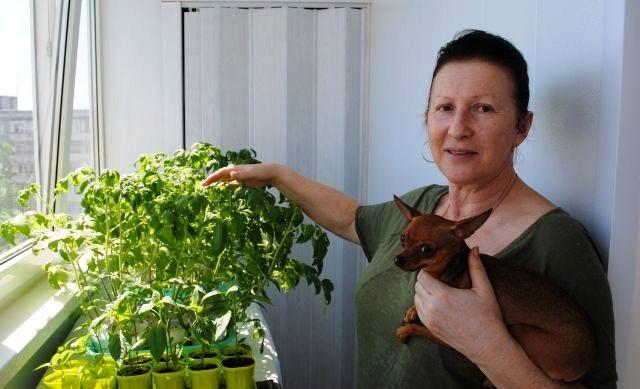 Заметки начинающего огородника. Покупать рассаду или выращивать самим?