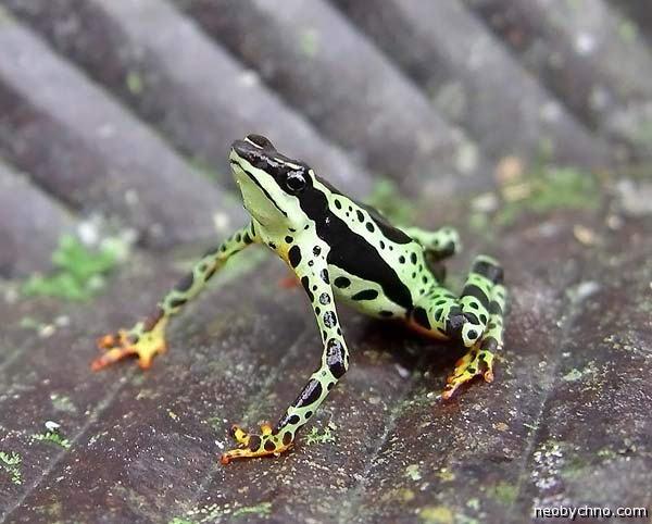 Фото самой красивой лягушки