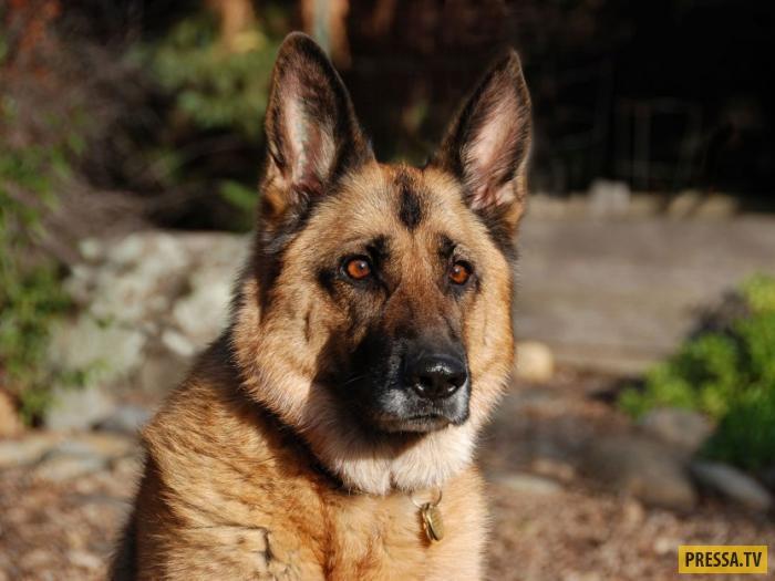 Верный пёс, который до последнего вздоха ждал своих хозяев