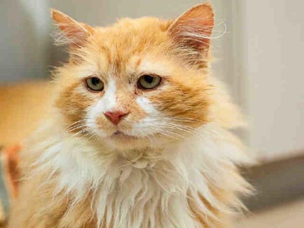 Кот возвращался… Он прошел 19 километров до дома, но его постигло разочарование