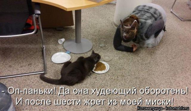 Позитивные котоматрицы для х…