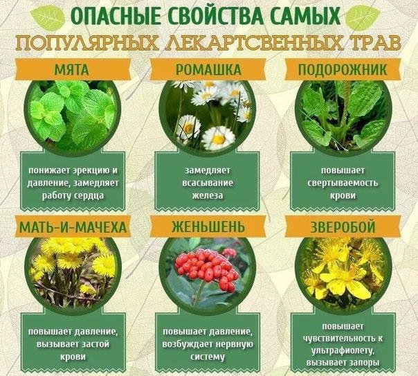 Опасные свойства лекарственных трав