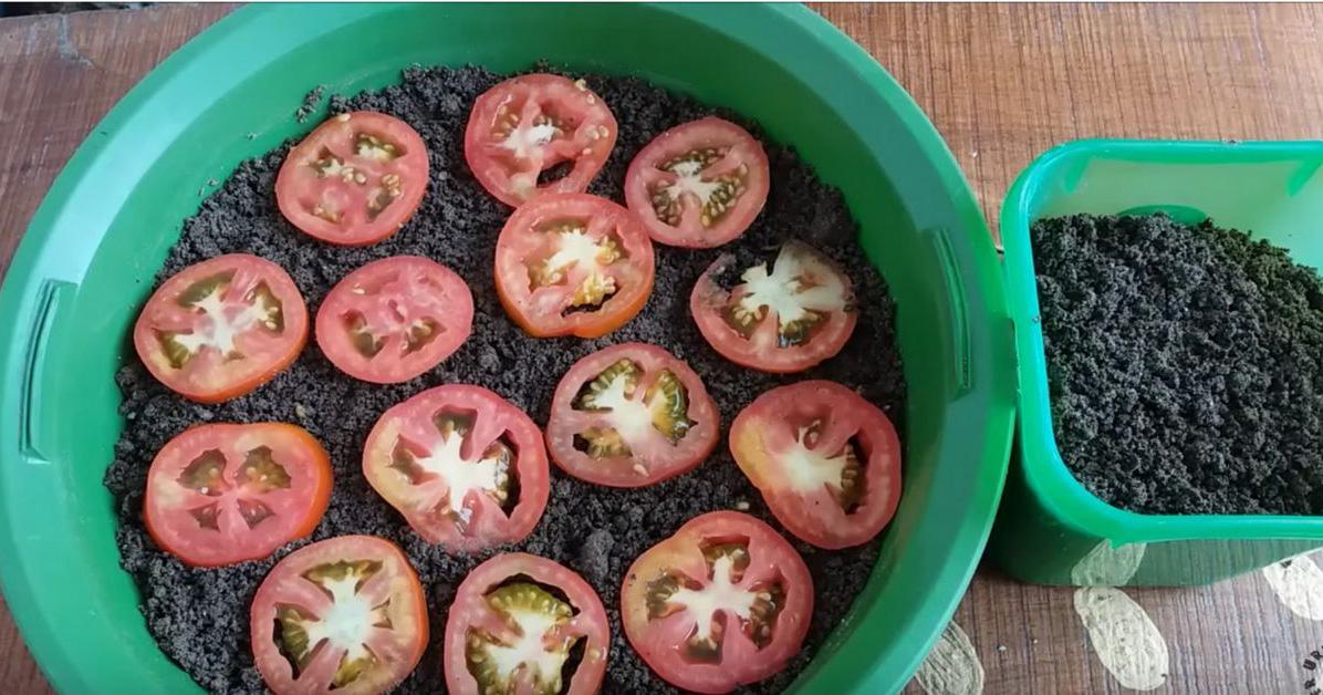 Используя этот способ выращивания помидоров, вы больше не будете покупать их в магазине