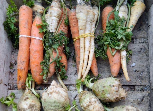 Какие овощи перезимуют на грядке, не потеряв товарные качества и полезные свойства