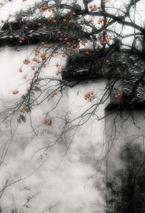 «Здесь, у крыльца, есть всё, что радует мой взор…» Китайская художница-иллюстратор Ibuki Satsuki