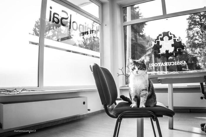13. Рита в страховом агентстве домашние животные, коты, кошка, кошка в магазине, кошки, фотопроект, черно-белая фотография, черно-белое фото