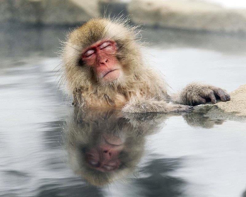 Джигокудани - парк снежных обезьян, Япония. Фото