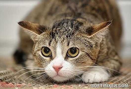 cat-stress