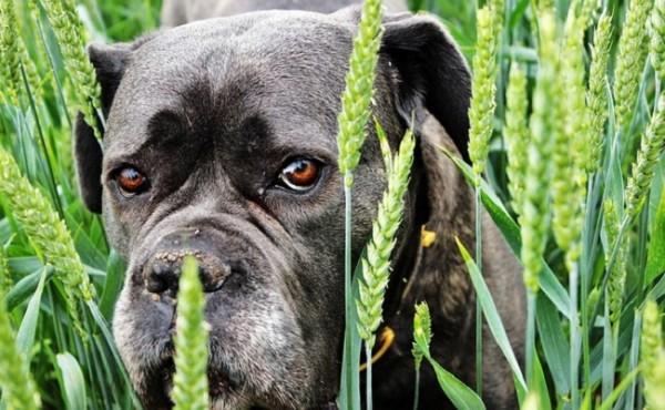 Почему собаки прибиваются к человеку?
