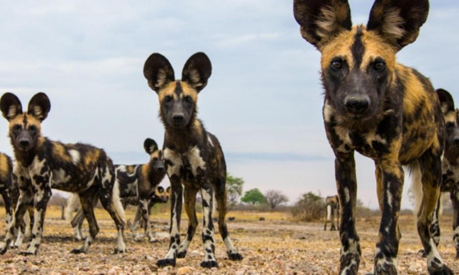 Кто виноват в бродячих собаках