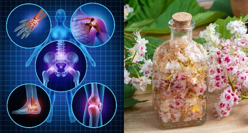 цветы конского каштана лечение