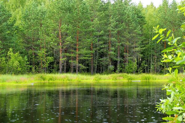 Лес - какие тайны и загадки он хранит?
