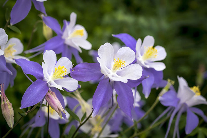 Цветы, которые нужно сеять в апреле