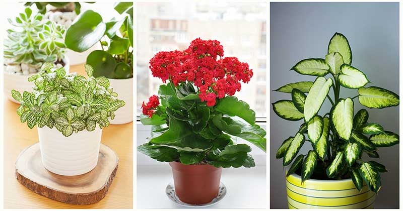 ТОП-15 самых живучих и неприхотливых растений для вашего дома