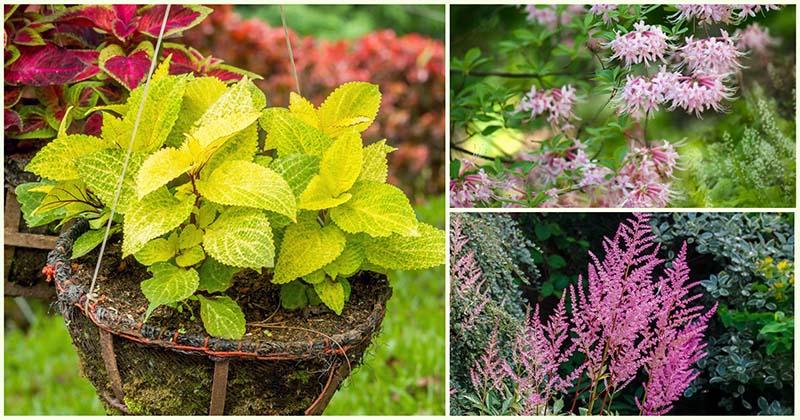 15 лучших тенелюбивых растений, которые поразят вас своей красотой