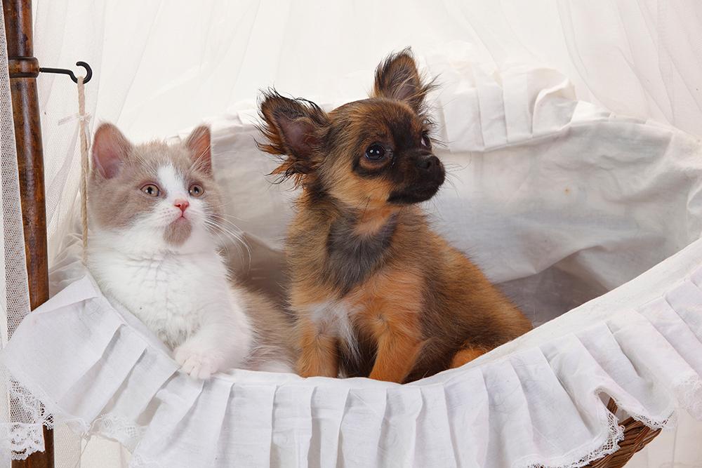 Почему люди делятся на собачников и кошатников?
