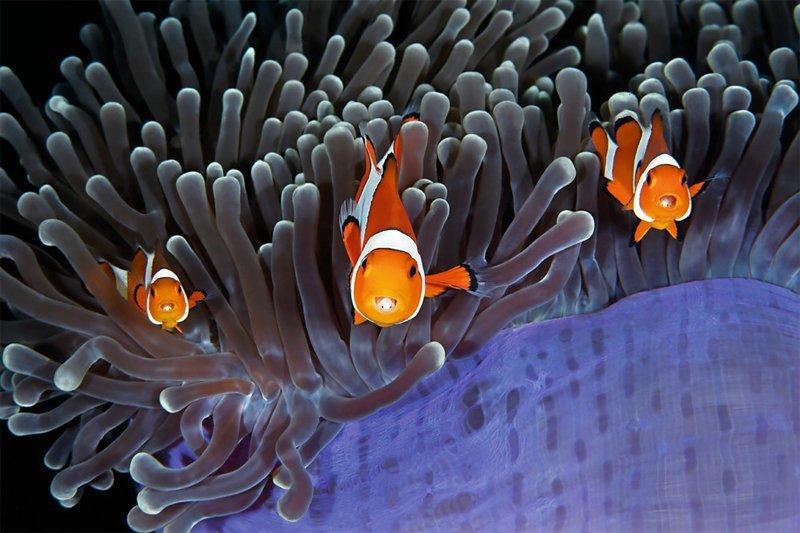 """Инсайдеры"""", Цин Лин Wildlife Photographer of the Year, животные, конкурс, мир, под водой, природа, фотография, фотомир"""